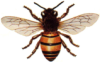 runswithbees userpic