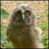 smiling_owlet userpic