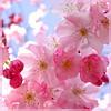 Татьяна Мараховская: весна