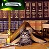 кот под книгой