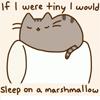 Волли: спящая кошка