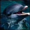 dolphin71 userpic