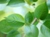 aroma_kosmetik userpic