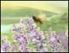 lavenderhillva userpic