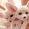 bucketload of cute