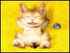 котенок солнечный