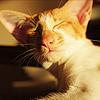 waters_cat userpic