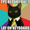 Maggie: hardly working: TPS reports!