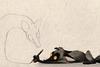 Лиса рисует