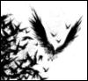 Khall: crows
