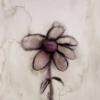 Jessica: grey daisy