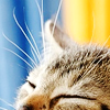 ruka_nanjou userpic