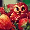 Melly: strawberry owl
