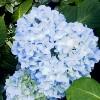 tikatu: flowers