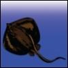 tide_pools userpic