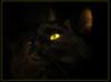 я кошка