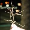 amargonaria userpic