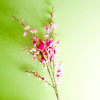 Mish: Misc -- Green/Pink Flowers