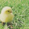 11oo1: chick