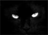 black_cat_10