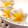 lotusice: frangipani 1