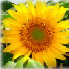 moira_inori userpic