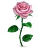 an4es_pressa userpic
