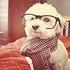 Stock: Hipster dog