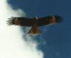 vbeelokurskiy: Орел