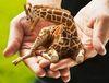 Shirebound: lap giraffe
