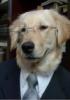 literate_dog