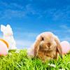 Smug bunny