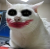 serious cat joker