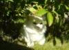 cat_davy userpic