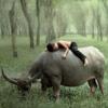 на носороге