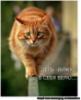 anut_katty