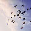 lepitera: freifliegend