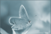 lady_sirenia userpic