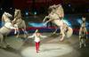 Цирк с конями