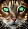08.ojos verdes