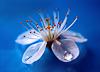 Цветок и капля
