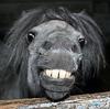 Ржу как лошадь