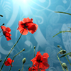 summer red poppies sunlight teal