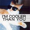 lulz//cooler than you cat