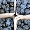 -: Stock - blueberries