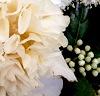 Vieux Camellia fanfiction