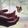 reach for a butterfly