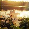 flower-riverside