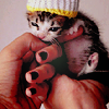 obsidianinks: baby kitty cute
