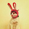 obsidianinks: cat bunny